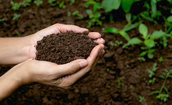 Why experts desperately want to add this micronutrient to the soil